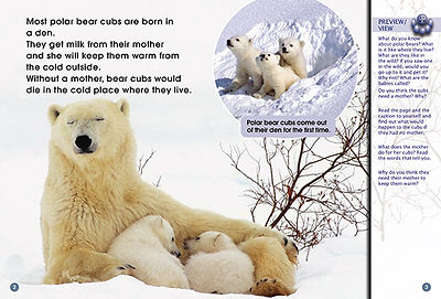Knut — A Pet or Not?