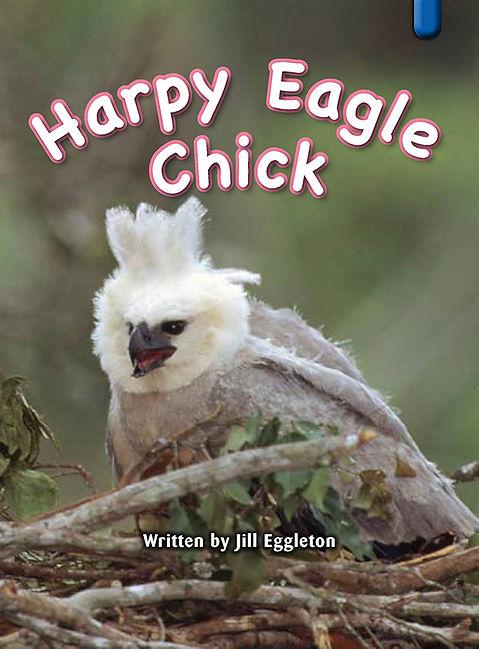 Harpy Eagle Chick