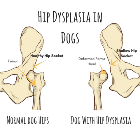 Dog-Foods-for-Hip-Dysplasia-and-Arthriti
