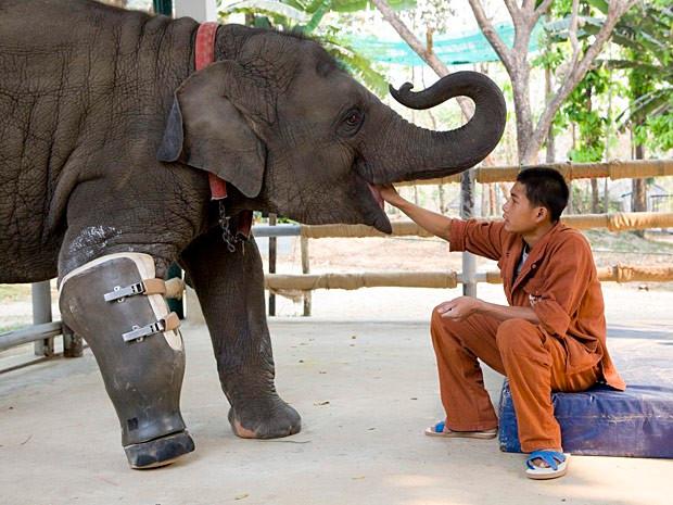 elefanta-protese-620.jpg