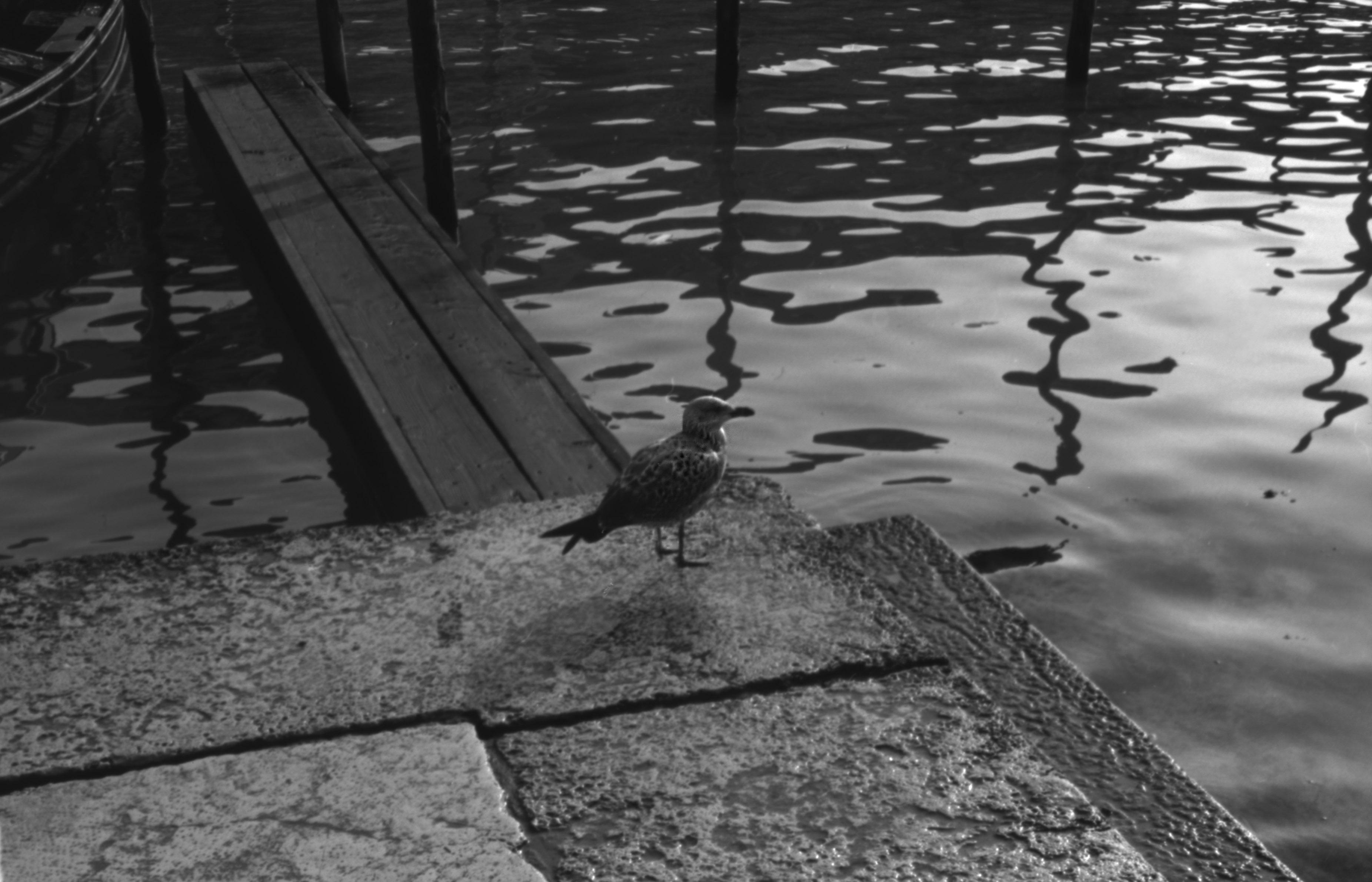 Venecia_35mm_72