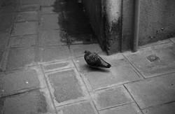 Venecia_35mm_48