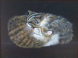 sleeping kittens 9x12 Oil on Canvas Boar