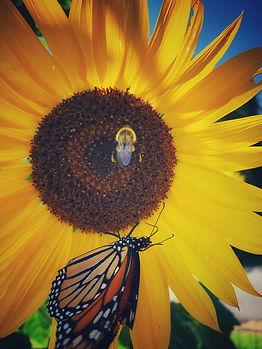 flowerbeebutterfly2.jpg