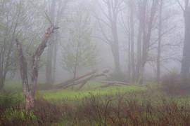 Foggy Spring Day in Minnewaska