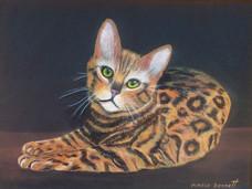 Bengal 9 x12 Oil on Canvas Board.jpg