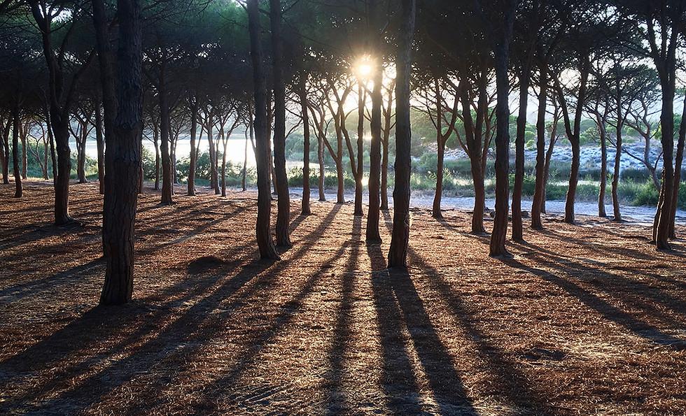 Pineta di Sant'Anna - La Pecora Nera B&B