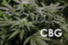 CBG Image.jpg