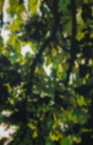 'lockdown - Through the trees'4.jpg