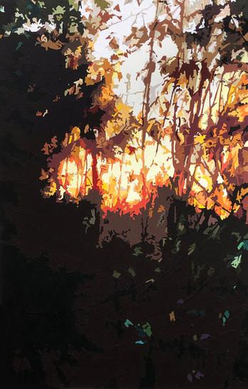 Through the Trees #3.jpg