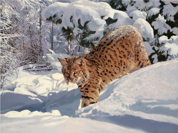 """Bobcat"""