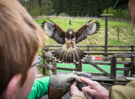 Kielder Water Birds of Prey Centre