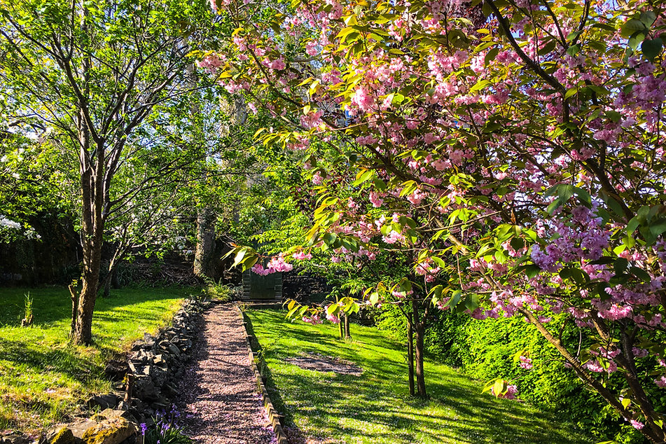 Cherry blossom in the garden of The Five Turrets