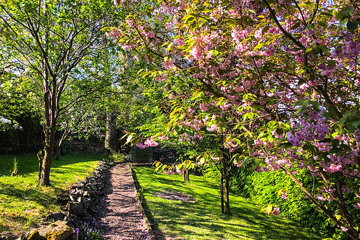Cherry trees in blossom in the garden of The Five Turrets, the historic holiday home at the heart of the Scottish Borders