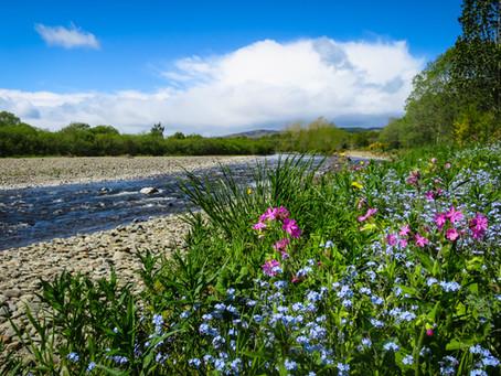 Go West: a Selkirk circular walk