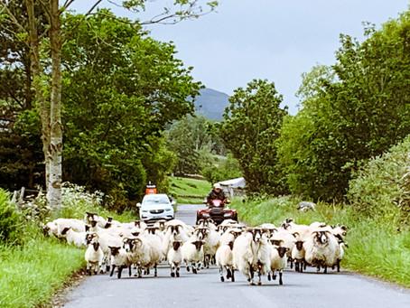 Paddy Slacks and Tweed Valley road cycle circular