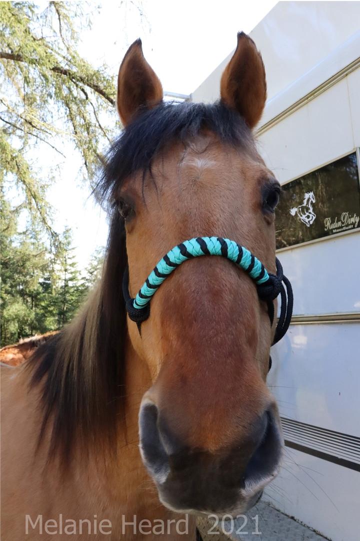 Horse face.jpg