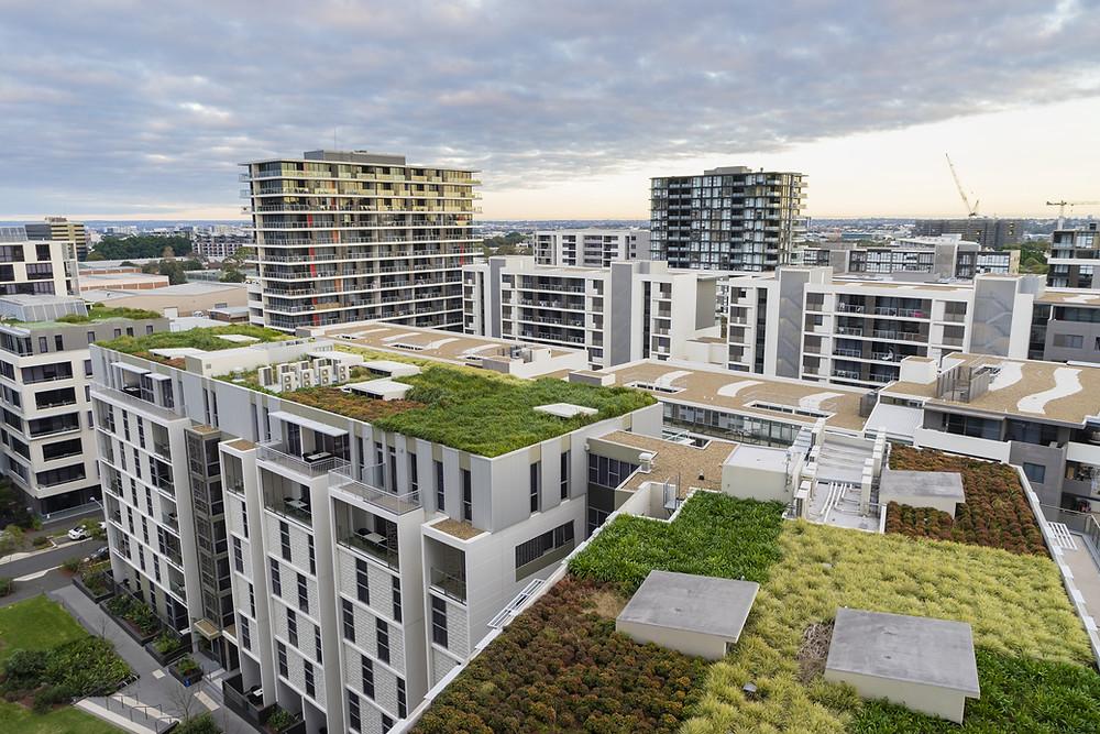 Gründächer in der Stadt verbessern das Kleinklima