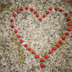 Loving Kindness & Compassion Meditation