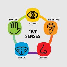 Five Senses to Mindfulness