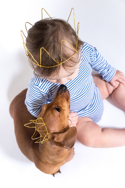 blond toddler and dachshund  by with cro