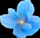 39-396596_flower-png-tumblr-flowers-blue