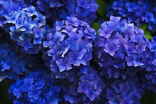 bloom-1851481_1920.jpg