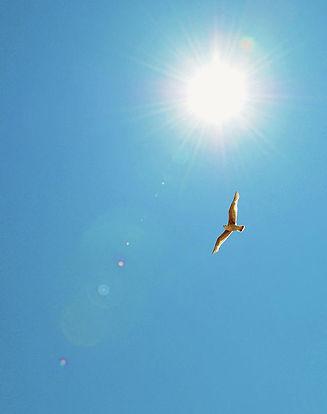 bird-flying-in-blue-sky-simon-potter.jpg