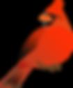 Melbourne Village Mascot Cardinal