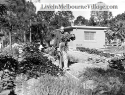 Live In Melbourne Village Man with Vegetables.jpg
