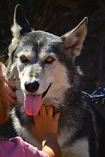 Wolf Connection tongue out hand on neck.