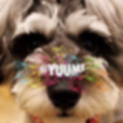 YUUMI2.jpg