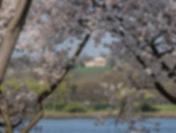 Arlington House Cherry Blossoms.jpg