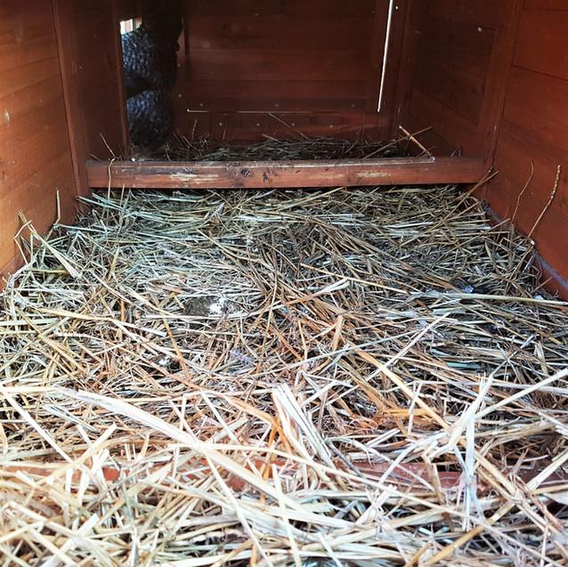 Litière pour le compost
