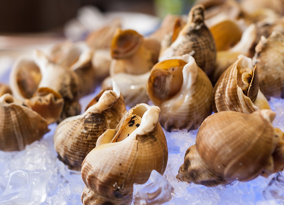 WHOLE COOKED WHELK