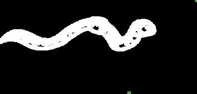 lombric_vectorisé_blanc_ss_fond.png