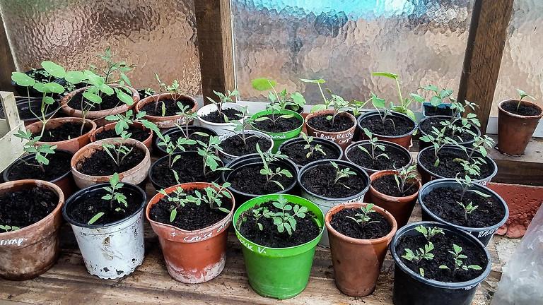 Atelier semis : realisons nos plants et semis biologiques pour plus d'autonomie