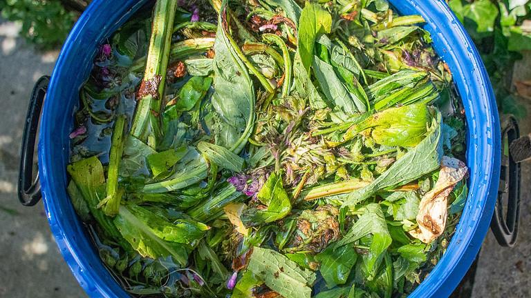 Soins naturels des plantes et extraits fermentés