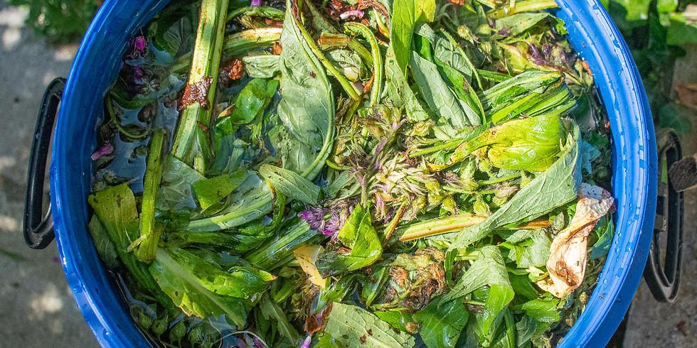 Atelier : Soins naturels des plantes et extraits fermentés