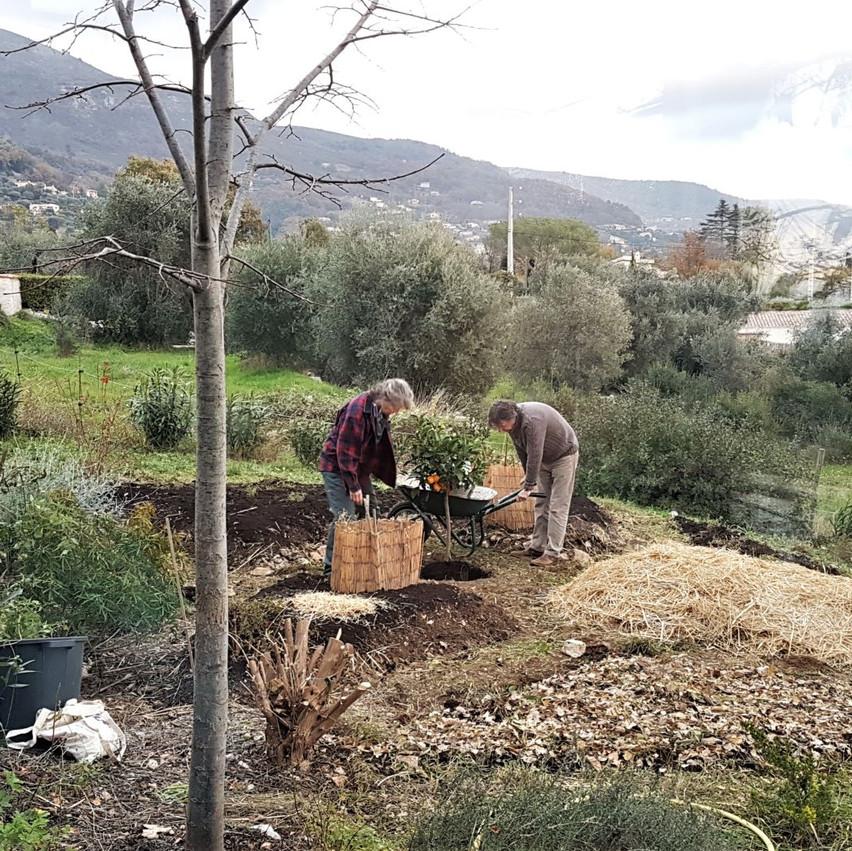 Etape plantation de l'oranger