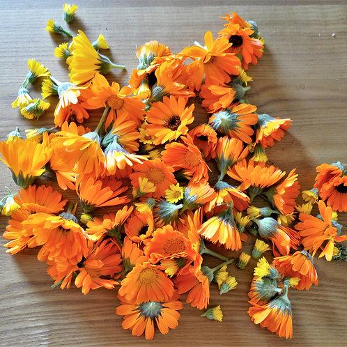 Absinthe séchée (non fleurie)