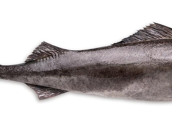 TOOTH FISH - BLACK COD