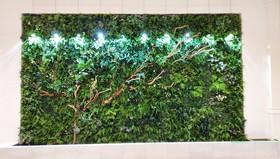 壁面スパイラルツリー