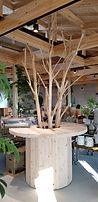クリの木④.jpg