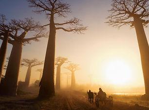Allée-des-Baobabs-Morondava-slide-home.j