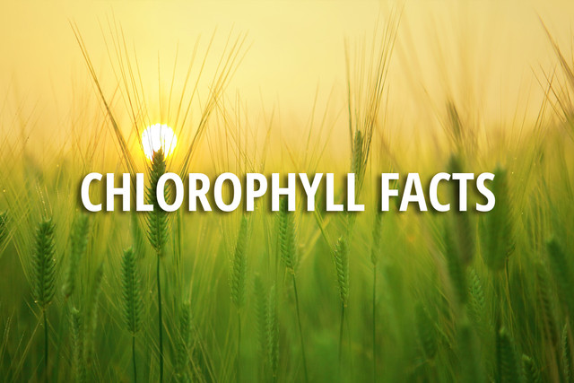 Chlorophyll Facts