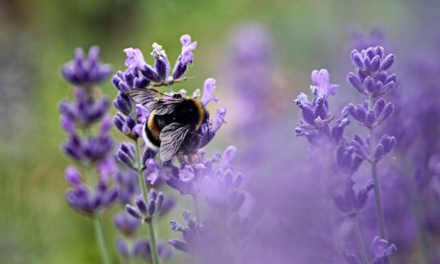Plants that Help Bees sorted by Sun Exposure