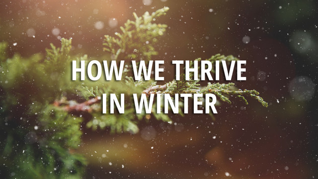 How We Thrive in Winter