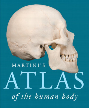 This Atlas contains excellent anatomical photographs organized by body system. It also has illustrated guide to the embryological development of each system. Photos by Ralph T. Hutchings, celebrated biomedical photographer; illustrations by William Ober, MD, and Claire Garrison, RN.