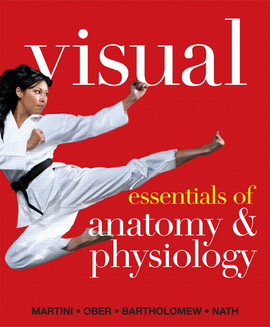 Visual Essentials of A&P is intended for 1-semester courses in A&P, and uses the same innovative modular format as Visual A&P.